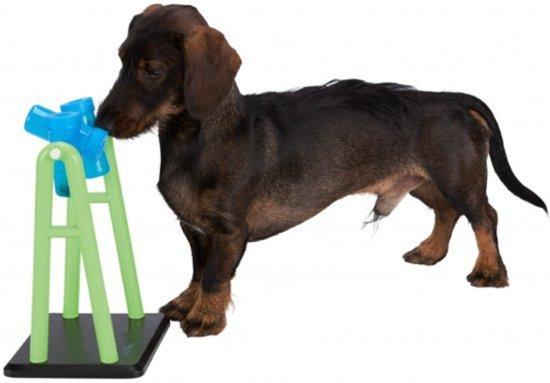 Beste hondenspeelgoed